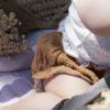 bloomer crème caramel - un nid dans les nuages